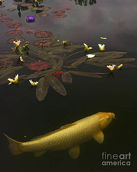 0212 Yellow Koi by Lawrence Costales