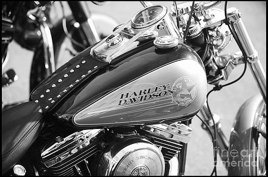 110th Anniversary Harley Davidson by Stefano Senise