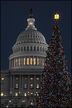 Erika Fawcett - 2013 Capitol Tree