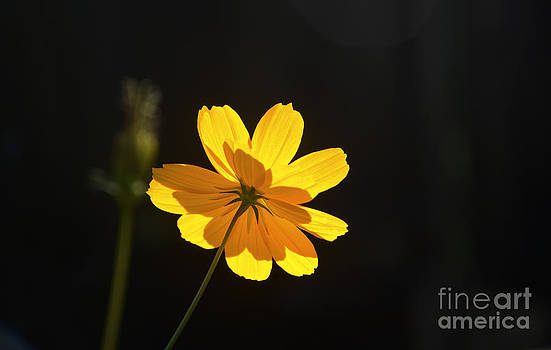 A Flower by Andre Paquin