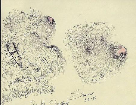 Shan Ungar - A Poodle Doodle