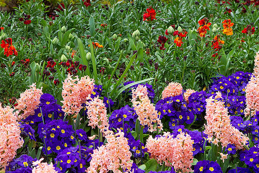 Fizzy Image - a variety of bright colourful spring flowers blloming in St Jame