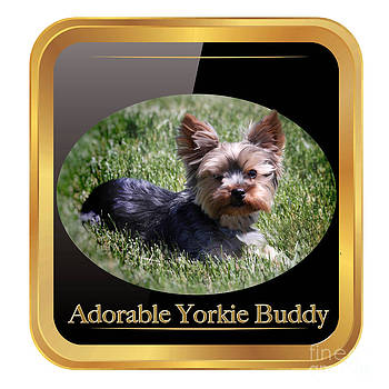 Adorable Yorkie Buddy  by Heinz G Mielke