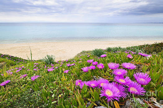 Elena Elisseeva - Aegean sea coast in Greece