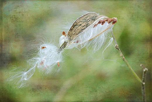 Fraida Gutovich - Against The Wind