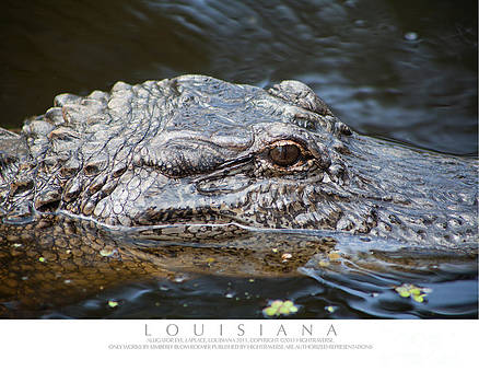 Alligator Eye by Kimberly Blom-Roemer