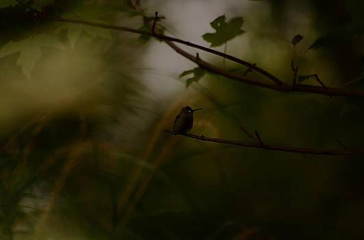 Alone by Lori Tambakis
