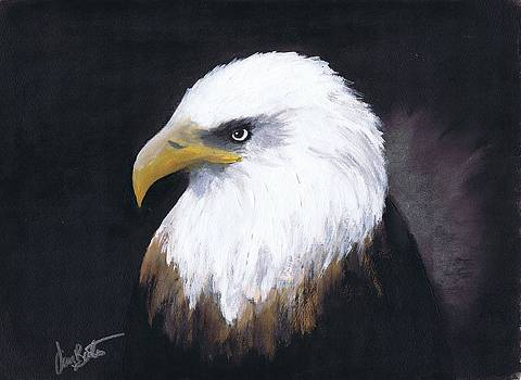 American Bald Eagle by Jerry Bates