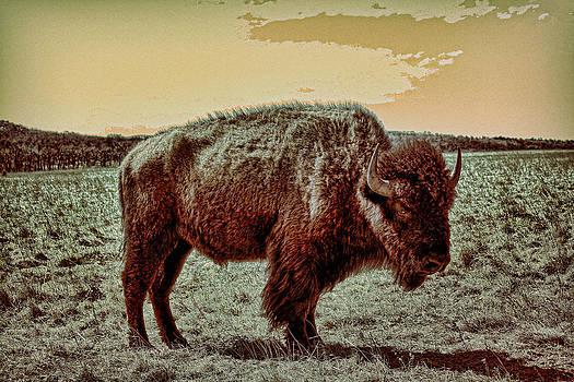 TONY GRIDER - American Buffalo