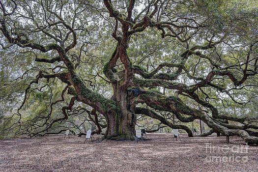 Dale Powell - Angel Tree