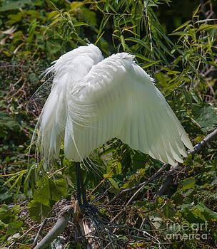 Dale Powell - Angel Wings