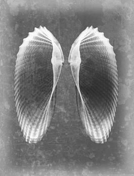 Roy Livingston - Angel Wings Sea Shell X-ray Art
