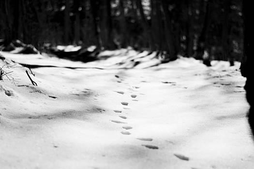 Newnow Photography By Vera Cepic - Animal footprints in snow in forest