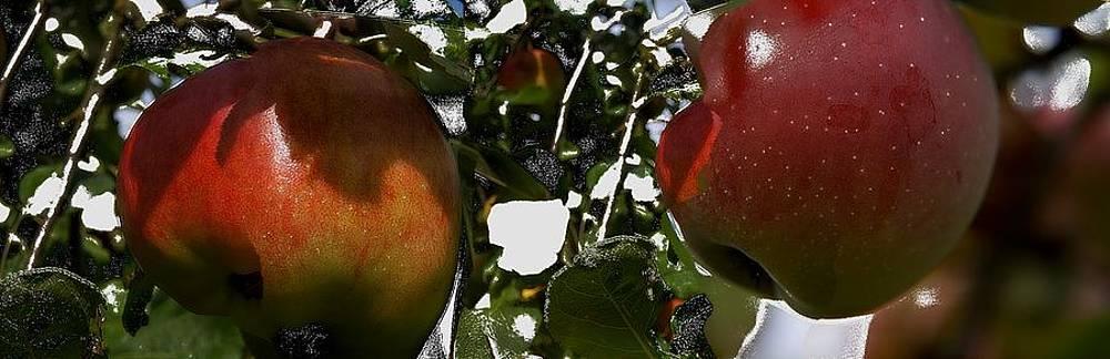 Apfelkuchen by Klaas Hartz