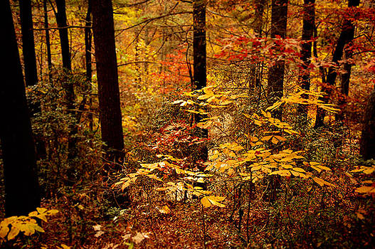 Appalachian Fall by Phyllis Peterson