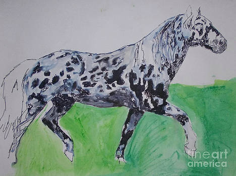 Appaloosa by Patries Van Dokkum