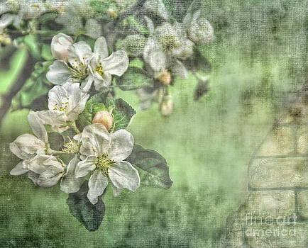 Apple Blossom  by Andrea Kollo