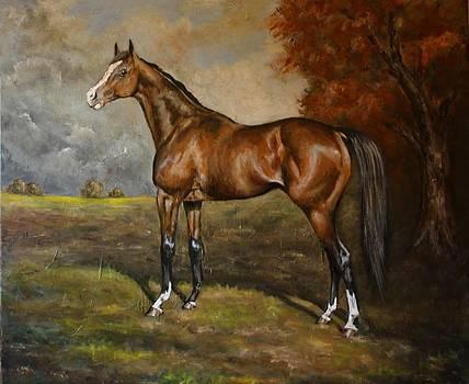 Arabian Horse by Birgit Schnapp
