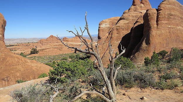 Arches National Park by Diane Mitchell