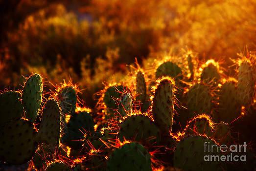 Susanne Van Hulst - Arizona Cactus