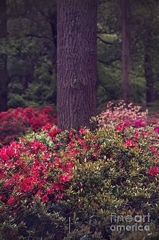 Svetlana Sewell - Around a Tree