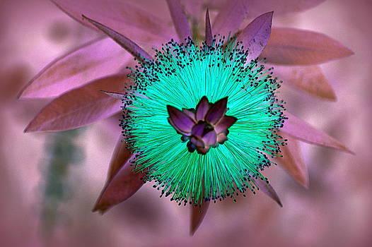 Artistic Bottle Brush Flower by AJ  Schibig