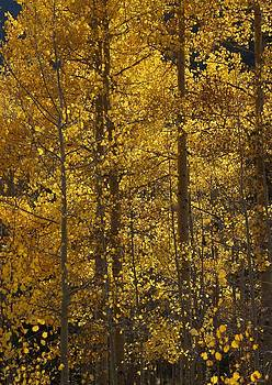 Julie Grandfield - Aspen Glow vertical