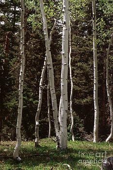 Jerry McElroy - Aspen Grove