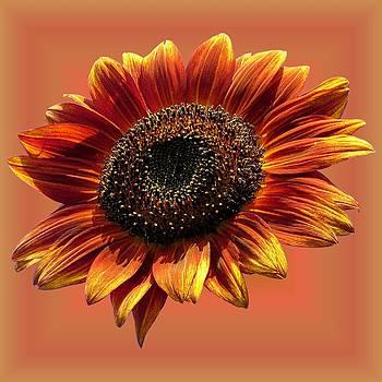 MTBobbins Photography - Autumn Beauty Orange