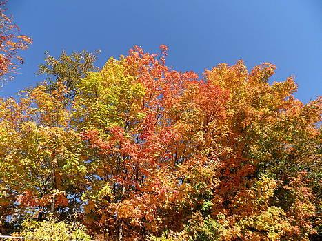 Kate Gallagher - Autumn Colors