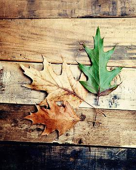 Autumn Leaves Ablaze with Color by Kim Fearheiley