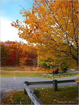 Autumn Leaves -CT by Frank Garciarubio