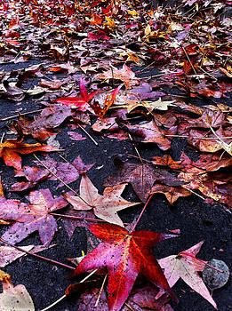 Autumn Leaves by Nino Via