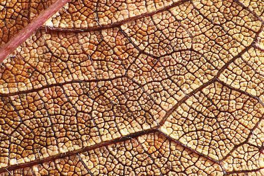 Autumn Leaves No.10 by Daniel Csoka