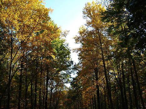 Autumn Trees by Sarah Manspile