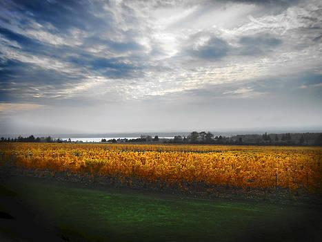 Autumn Vineyard by Jonathan Westfall