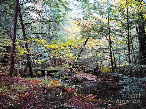 Autumn Woods by Linda Marcille