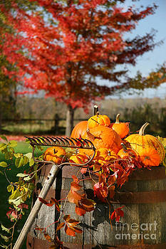 Sandra Cunningham - Autumns colorful harvest