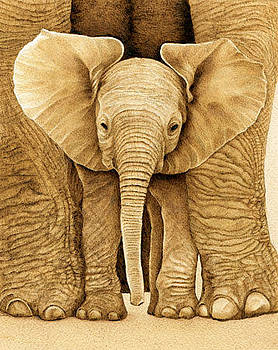Baby Elephant by Cate McCauley