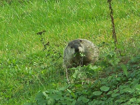 Backyard Visitor by Lila Mattison