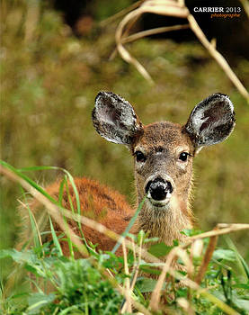 Bambi by Gino Carrier