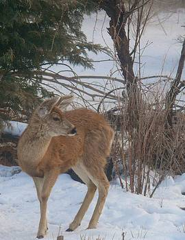 Bambi in the Winter Garden by Jacquelyn Roberts