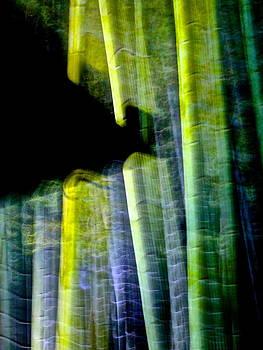 Larry Knipfing - Bamboo Spirit Dance - 3