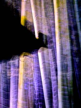 Larry Knipfing - Bamboo Spirit Dance - 4