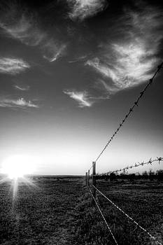 Barbed Wire Fence by Shane Dickeson