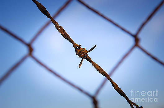 Tim Hester - Barbed Wire