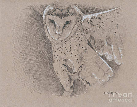 Barn Owl by Steve Hamlin