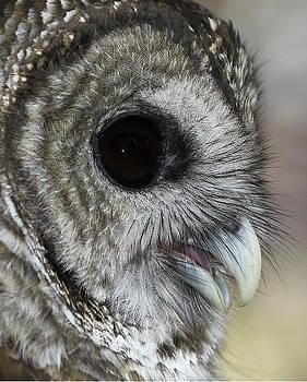 Erin Tucker - Barred Owl 2