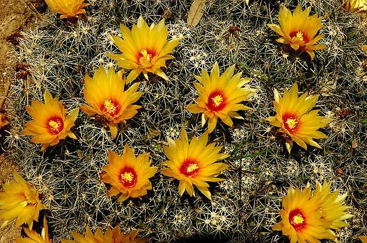 Robert Anschutz - Barrel Blooms