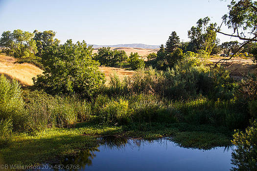 Bass Pond in Hills by Brian Williamson